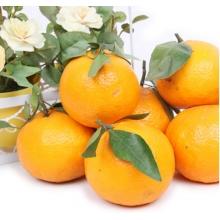 云南玉溪特产皇帝柑新鲜水果桔子早熟青黄皮橘子柑橘皮薄多汁10斤