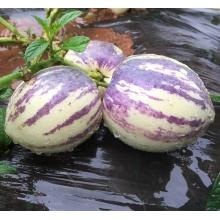 新鲜水果 人参果 长寿果云南石林人参果黄肉老品种特大果